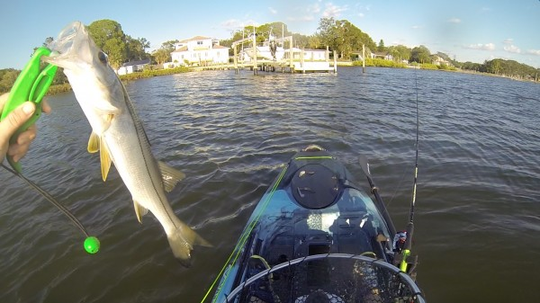 snook caught off vibe seaghost 110